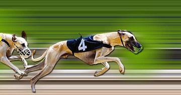 Dog racing betting strategies sports betting talk radio